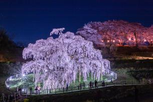 三春滝桜 日本 福島県 三春町の写真素材 [FYI03157960]