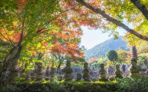 紅葉の化野念仏寺の写真素材 [FYI03158099]
