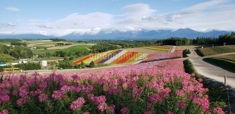 大自然の中の花畑の写真素材 [FYI03158281]