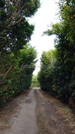 木のトンネルの写真素材 [FYI03158510]