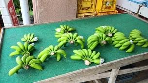バナナ販売の写真素材 [FYI03158530]