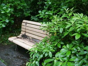 雨のベンチの写真素材 [FYI03159157]