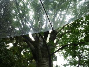 雨の庭園の写真素材 [FYI03159159]