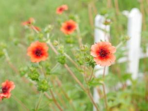 季節を感じる花の写真素材 [FYI03159191]