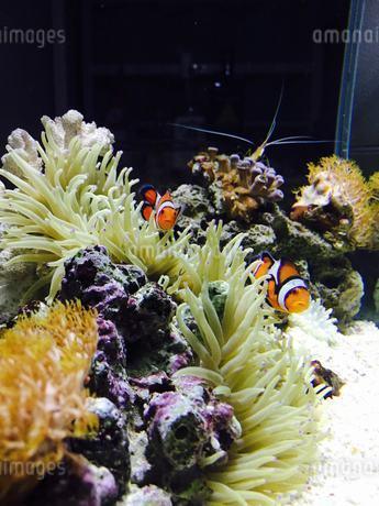 海水魚の写真素材 [FYI03159252]