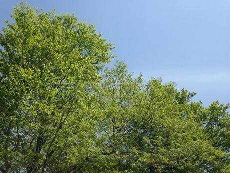 木々の写真素材 [FYI03159299]
