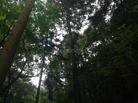 森林浴の写真素材 [FYI03159306]