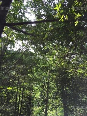 森林の写真素材 [FYI03159370]