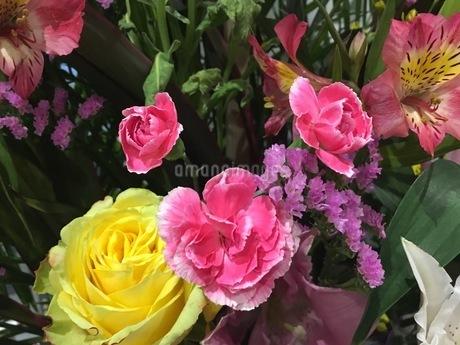 花束の写真素材 [FYI03159391]