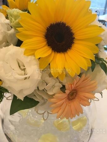 花の写真素材 [FYI03159396]