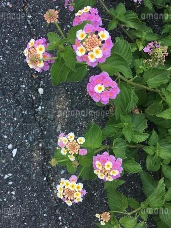 植物の写真素材 [FYI03159422]