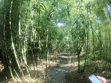 竹林の写真素材 [FYI03159725]