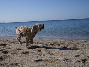 犬の写真素材 [FYI03159787]