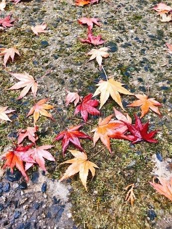 雨の紅葉狩りの写真素材 [FYI03159808]
