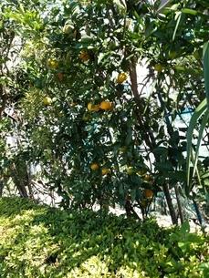 果実の写真素材 [FYI03159857]