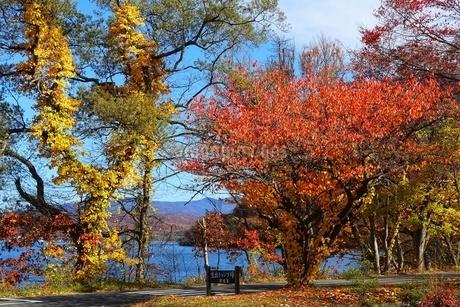 十和田湖湖畔の紅葉の写真素材 [FYI03159887]