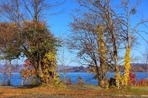 十和田湖湖畔の紅葉の写真素材 [FYI03159888]