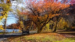 十和田湖湖畔の紅葉の写真素材 [FYI03159889]
