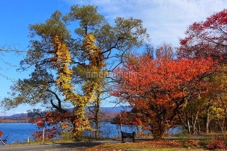 十和田湖湖畔の紅葉の写真素材 [FYI03159890]