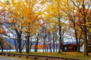 十和田湖の紅葉の写真素材 [FYI03159891]