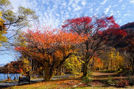 十和田湖湖畔の紅葉の写真素材 [FYI03159892]