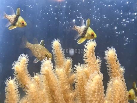 お魚の写真素材 [FYI03160212]