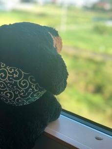 いぬが電車の窓から外を眺めるの写真素材 [FYI03160217]
