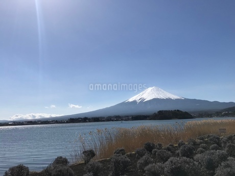 富士山と草木と湖と太陽の光の写真素材 [FYI03160232]
