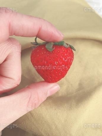 イチゴの写真素材 [FYI03160342]
