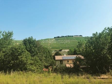 ワイン畑の写真素材 [FYI03160657]