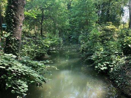森の写真素材 [FYI03160659]