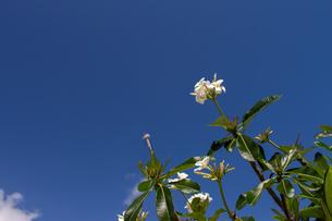 ハワイの青空の写真素材 [FYI03160846]