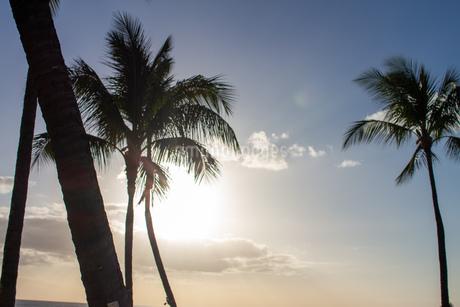 ハワイの夕焼けの写真素材 [FYI03160868]