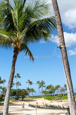 ハワイの青空の写真素材 [FYI03160908]