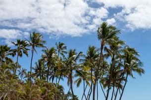 ハワイの青空の写真素材 [FYI03160932]