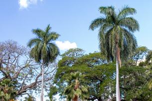 ハワイの青空の写真素材 [FYI03160943]