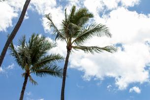 ハワイの青空の写真素材 [FYI03160947]