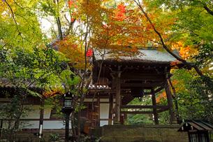 11月 紅葉の長楽寺の写真素材 [FYI03161112]