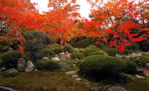 11月 鷹ヶ峯の源光庵 -京都の紅葉-の写真素材 [FYI03161119]