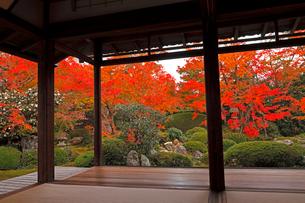11月 鷹ヶ峯の源光庵 -京都の紅葉-の写真素材 [FYI03161120]