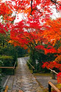 11月 鷹ヶ峯の光悦寺 -京都の紅葉-の写真素材 [FYI03161125]