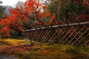 11月 鷹ヶ峯の光悦寺 -京都の紅葉-の写真素材 [FYI03161126]