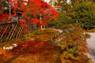 11月 鷹ヶ峯の光悦寺 -京都の紅葉-の写真素材 [FYI03161127]