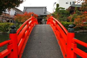 11月 紅葉の神泉苑の写真素材 [FYI03161131]