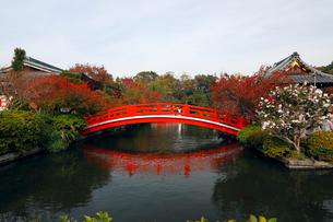 11月 紅葉の神泉苑の写真素材 [FYI03161132]