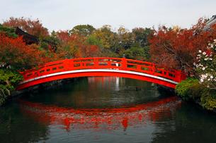 11月 紅葉の神泉苑の写真素材 [FYI03161133]