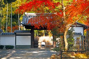 11月 紅葉の直指庵 -京都の秋-の写真素材 [FYI03161154]