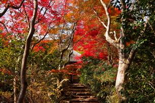 11月 紅葉の直指庵 -京都の秋-の写真素材 [FYI03161155]