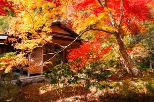11月 紅葉の直指庵 -京都の秋-の写真素材 [FYI03161156]