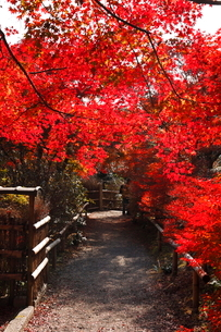 11月 紅葉の直指庵 -京都の秋-の写真素材 [FYI03161158]